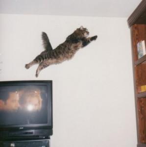 Streaky the Supercat.